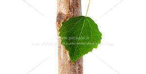 275 JPG 8000x6000 300dpi 300x152 - عکس با کیفیت مداد با طرح شاخه درخت و برگ