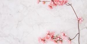 عکس با کیفیت شکوفه های زیبای بهاری سفید و صورتی بر روی صفحه ابر و باد