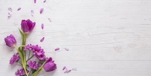 عکس با کیفیت گل های لاله بنفش و گل های داوودی با گلبرگ های داوودی