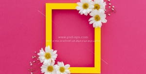 عکس با کیفیت گل های بابونه در گوشه های قاب زرد بر روی زمینه سرخابی