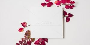 عکس با کیفیت شاخه هایی با برگ های سرخ و قاب سفید برای درج تصویر شما