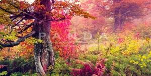عکس و تصویر با کیفیت بالای طبیعت و جنگل