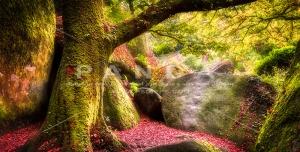 عکس و تصویر با کیفیت بالا و زیبای جنگل رویایی