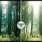 فیلم آموزش ایجاد تلئلو نور خورشید یا انوار نور از لابه لای شاخه درختان جنگ یا پارک با فتوشاپ + HD