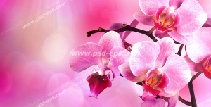 عکس با کیفیت شاخه ای از شکوفه های صورتی بهاری زیبا با پس زمینه صورتی با تابش نور خورشید
