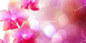 عکس با کیفیت شاخه ای از شکوفه های صورتی بهاری زیبا با زمینه صورتی با پرتوهای نور خورشید