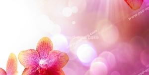 عکس با کیفیت شاخه هایی با شکوفه های صورتی بهاری زیبا با زمینه صورتی با پرتوهای نور خورشید