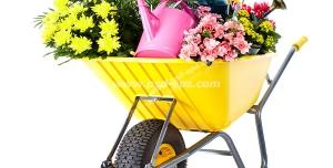 عکس با کیفیت فرغون زرد رنگ با چند مدل گل و گلدان و آبپاش در داخل آن