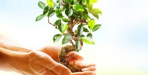 عکس با کیفیت نمادین ارتباط انسان با محیط زیست و گیاهان با تصویر گیاه بن سای در دست با زمینه آبی روشن