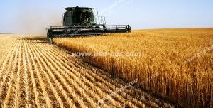 عکس با کیفیت مزرعه گندم در حال درو کردن گندم های طلایی با ماشین دروگر