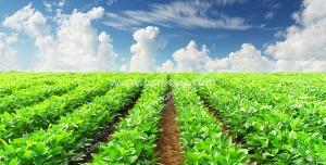 عکس با کیفیت زمین کشاورزی با بوته های گیاهان کاشته شده در آن با آسمان آبی و ابرهای پراکنده