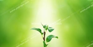 عکس با کیفیت گیاه کوچک کاشته شده در خاک زیر تابش پرتوهای نور خورشید با زمینه سبز روشن و زیبا