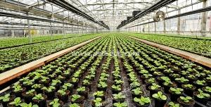 عکس با کیفیت گلخانه ای بزرگ با گلدان های کوچک گیاهان