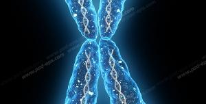 عکس با کیفیت تصویر کروموزوم X انسان با رنگ آبی بر روی زمینه مشکی