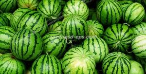عکس با کیفیت انبوه هندوانه های چیده شده بر روی هم درون فروشگاه یا میادین میوه و تره بار