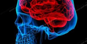 عکس با کیفیت شبیه سازی مغز انسان به همراه جمجمه در پس زمینه سیاه رنگ