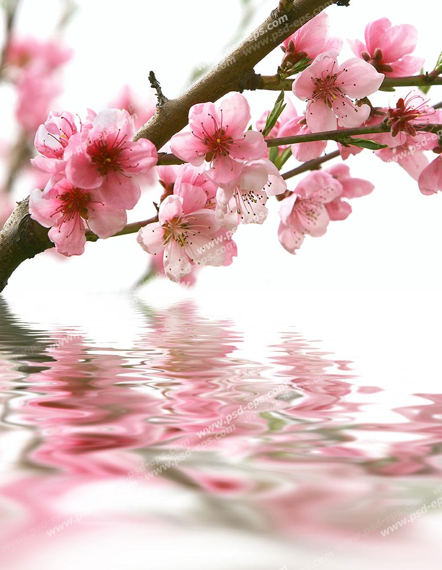 عکس شکوفه عید نوروز