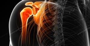 عکس با کیفیت آناتومی اسکلت بدن انسان و درد و گرفتگی در قسمت استخوان شانه و کتف