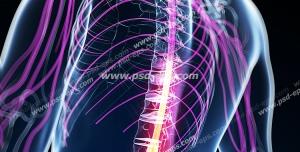 عکس با کیفیت آناتومی اسکلت بدن انسان و درد و دیسک در قسمت مهره های ستون فقرات کمر