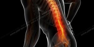 عکس با کیفیت آناتومی اسکلت بدن آقایان و دیسک و درد در قسمت ستون فقرات