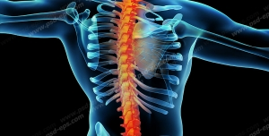 عکس با کیفیت آناتومی اسکلت بدن انسان ( آقایان ) و دیسک ستون فقرات
