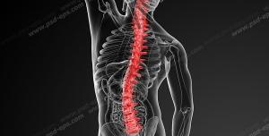 عکس با کیفیت آناتومی اسکلت بدن آقایان و درد و دیسک در قسمت ستون فقرات