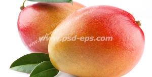 عکس با کیفیت دو عدد میوه انبه قرمز رنگ در کنار هم با زمینه سفید