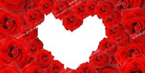 عکس با کیفیت حلقه قلب ساخته شده از گل های رز در میان انبوه گل های رز