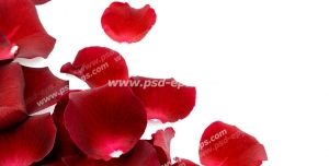 عکس با کیفیت گلبرگ های گل رز قرمز در حاشیه سمت چپ ریخته شده بر روی سطح سفید رنگ