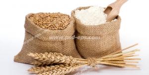 عکس با کیفیت چند خوشه گندم به همراه کیسه ای از دانه های گندم و آرد گندم