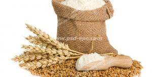 عکس با کیفیت چند خوشه گندم به همراه آرد گندم و دانه های گندم ریخته شده