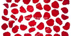 عکس با کیفیت گلبرگ های گل رز قرمز چیده شده در کنار هم بر روی سطح سفید رنگ