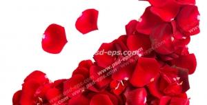عکس با کیفیت گلبرگ های گل رز قرمز چیده شده به شکل لبخند سا شکلک لبخند بر روی سطح سفید رنگ