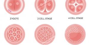 عکس با کیفیت تصاویری از سلولی در حال تکثیر