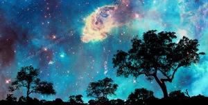 نقاشی فانتزی با کیفیت جنگل با درختان فراوان در هنگام شب زیر نور مهتاب و ستارگان با آسمانی مملو از ستاره های درخشان