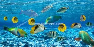 عکس با کیفیت پروانه ماهی های خط دار و وکتور ماهی و دیگر ماهی ها در دریا آسمان مجازی آکواریوم