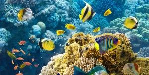 عکس با کیفیت آسمان مجازی آکواریوم وکتور ماهی ، پروانه ماهی و ماهی های شگفت انگیز رنگین کمانی در دریا