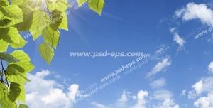 عکس با کیفیت آسمان مجازی یا طرح زیبا برای تایل سقف کاذب آسمان آبی در هنگام ظهر با نور خورشید به همراه شاخه سرسبز درخت