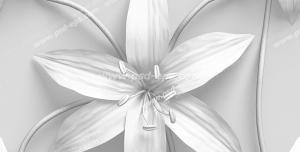 عکس با کیفیت دیوارپوش سه بعدی یا کاغذ دیواری سه بعدی با طرح لوکس گل های شش پر سفید