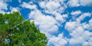 عکس با کیفیت آسمان مجازی یا طرح زیبا برای تایل سقف کاذب طرح تک درختی پر از برگ های سبز بر روی زمینه آسمان آبی با ابرهای پراکنده پنبه ای