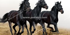 عکس با کیفیت سه عدد اسب سیاه با یال و دمی سیاه رنگ با افساری در دهانشان در حال یورتمه رفتن در زمین خاکی با زمینه آسمانی مد گرفته و سفید