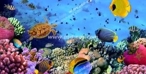 عکس با کیفیت ماهی های کوچک و بچه لاک پشت در اعماق دریا با مرجان های مغزی و قیطانی مناسب آسمان مجازی آکواریوم