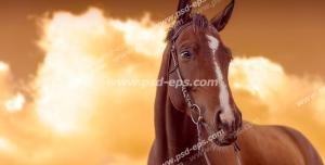 عکس با کیفیت اسبی زیبا و آرام به رنگ کرنگ با زمینه آسمانی ابری به رنگ نارنجی در هنگام غروب آفتاب
