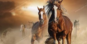 عکس با کیفیت دسته ای از اسب های اصیل به رنگ کرنگ با پیشانی سفید و اندامی ورزیده و چابک در حال تاخت رفتن در صحرا با زمینه آسمان در هنگام غروب آفتاب