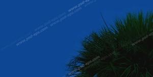 عکس با کیفیت آسمان مجازی شب یا طرح زیبا برای تایل سقف کاذب طرح تک درختی به همراه ماه کامل تابان در شب دشت