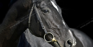 عکس با کیفیت پرتره اسبی سیاه رنگ با پیشانی سفید و افساری در دهانش
