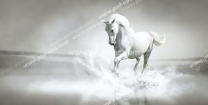 عکس با کیفیت نمایی از اسبی زیبا و چالاک سفید در حال قدم زدن در میان آبهای ساحل با زمینه خاکستری روشن