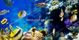 عکس با کیفیت وکتور ماهی های زرد در میان صخره های مرجانی مناسب آسمان مجازی آکواریوم