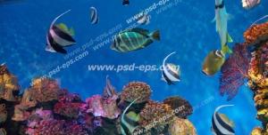 عکس با کیفیت وکتور ماهی های سیاه و سفید رنگ در حال شنا در میان مرجان های قیطانی مناسب آسمان مجازی آکواریوم