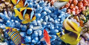 عکس با کیفیت ماهی های رنگارنگ و زیبا در میان مرجان قیطانی آبی رنگ مناسب آسمان مجازی آکواریوم